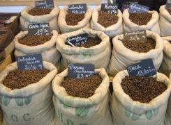 В Крыму будут выращивать кофе